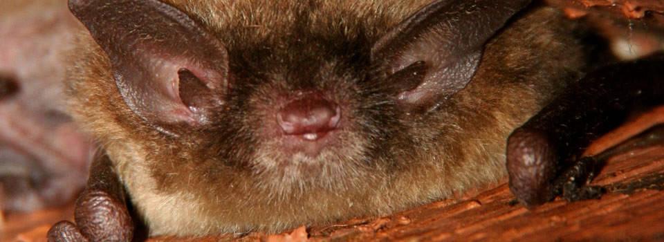 Friendswood bat control